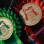 show-dogs-derbyshire-UK.jpeg