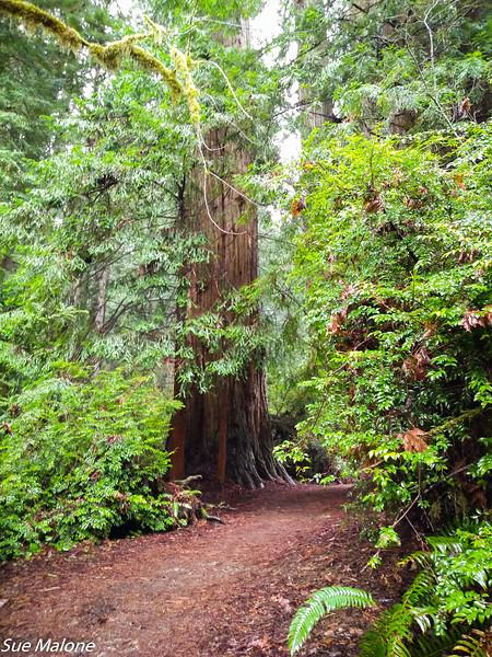 02-13-2021 Redwoods and Coast from Deborah-23.jpg
