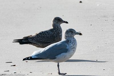 Backyard & Shore Birds