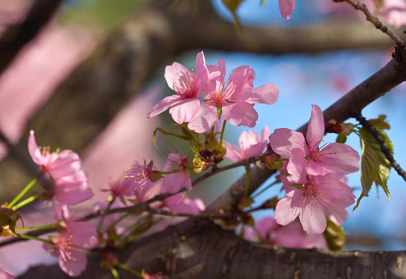 Spring12-1062 shrp.jpg