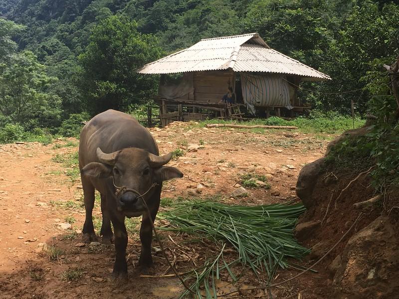 Villages in Mai Chau, a day trip near Hanoi that's easier than visiting Sapa.