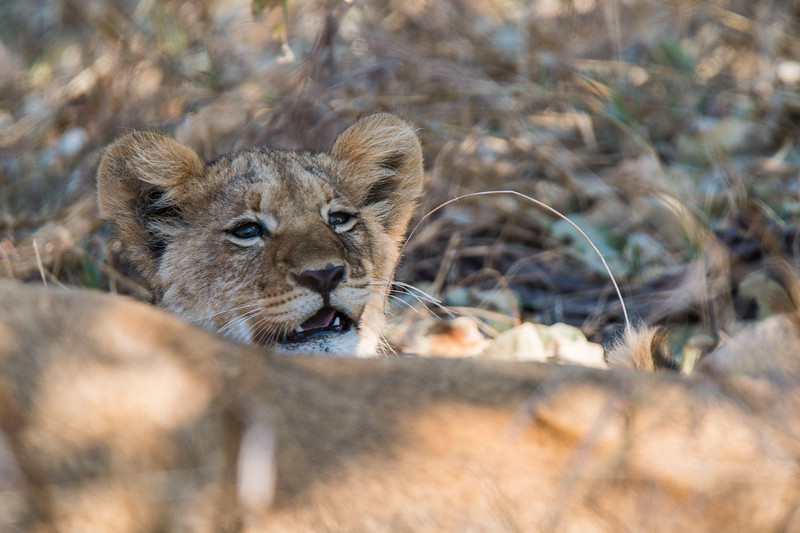 Botswana_June_2017 (2313 of 6179).jpg