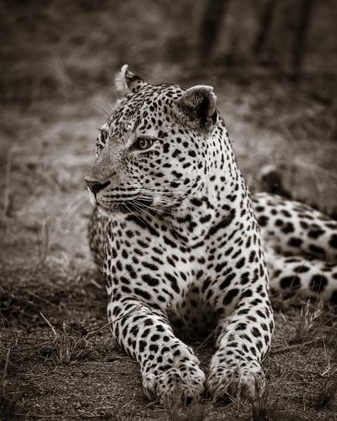 LeopardHills-20191028-1109.jpg