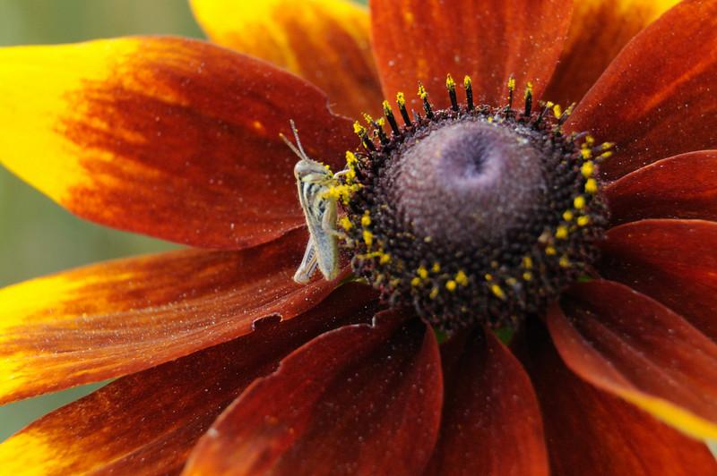 flowers_20080714-007.jpg