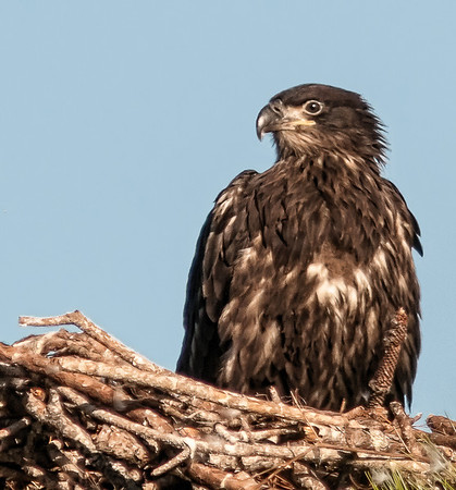 Melbourne Eagle's Nest - Feb 10, 2013