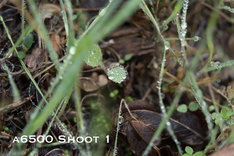 a6500 macro - Shoot 1-2.jpg