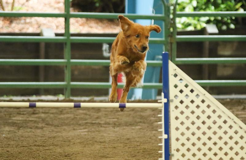 3-14-2016 Bloodhound-7124.jpg