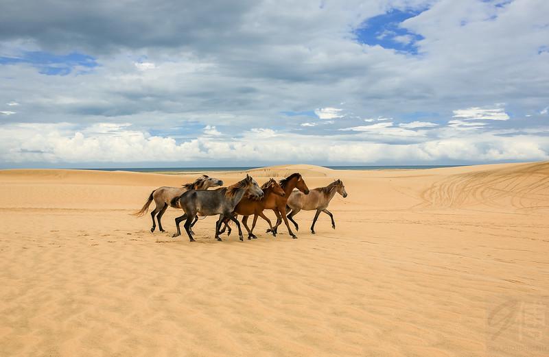 Horses at Jericoacoara dunes, Ceára - Brasil