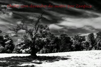 En blanco y negro - Black and White