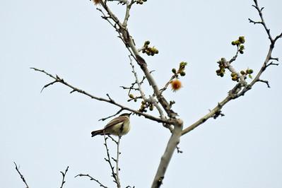 Busch Greenway_Busch Wildlife_04.13.19