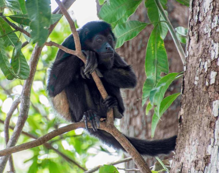 Costa Rica_Animals_Monkeys-6.jpg