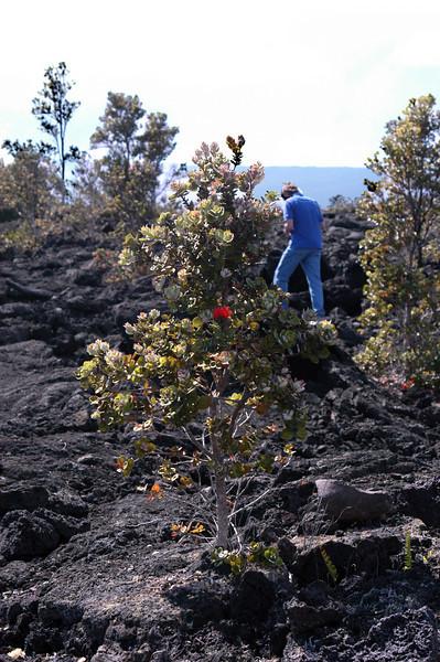 241- 20080412- Hawaii 15- Volcano Nat'l Park DSC_2998.jpg