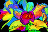 Close-up fine art photograph of a couple beautiful and colorful orchids. Abstract photograph painting artwork photography photo photographs Abstract photograph painting artwork photography photo photographs.