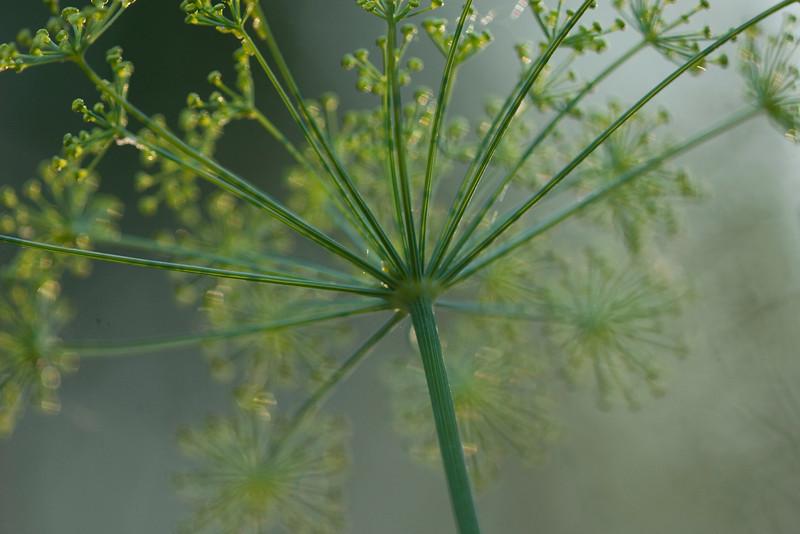 flower1636.jpg