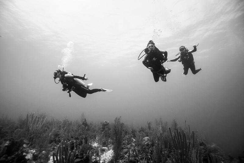 Scuba divers underwater, Secret Spot, Turneffe Atoll, Belize Barrier Reef, Belize