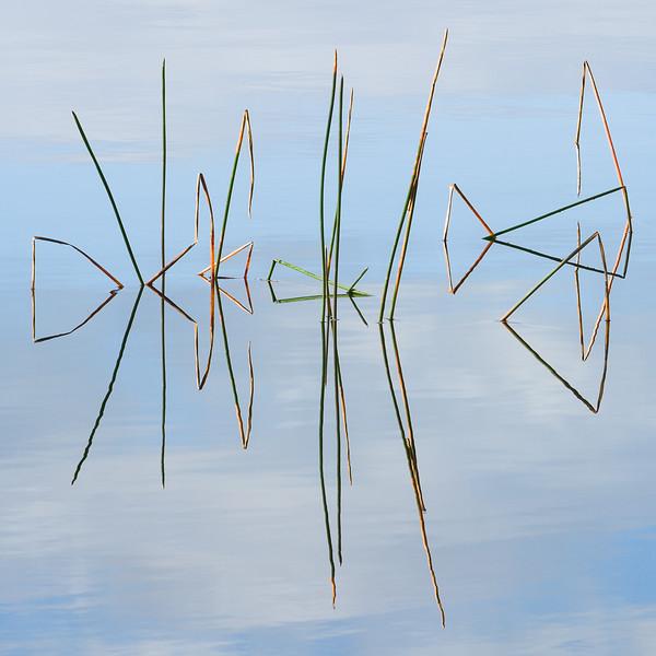 'Reeds' - New Zealand