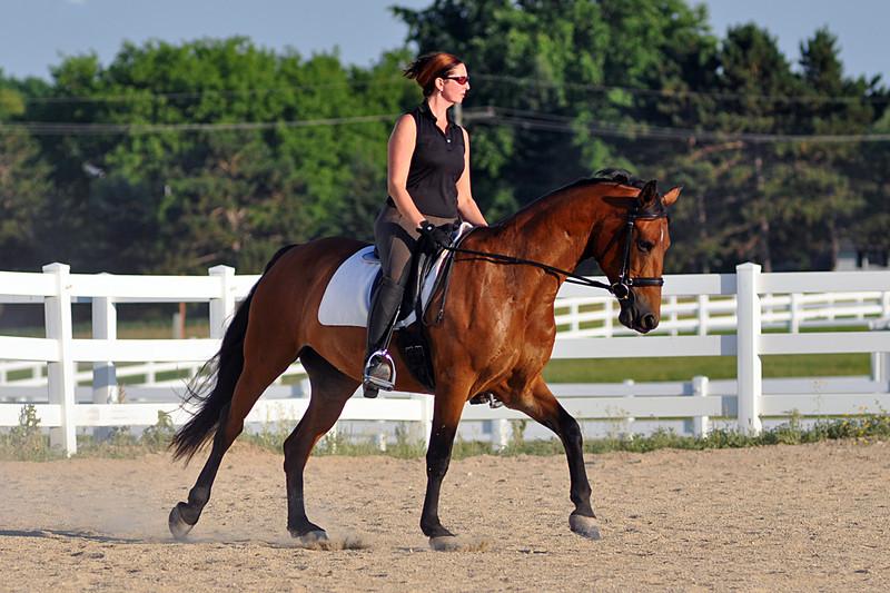 Horses July 2011 362a.jpg