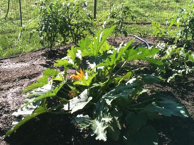 2012-08-16 Veggie Garden