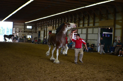 565 Mare 3-4 Clydesdale