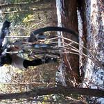 Michaux 01 31 2010 w mbm Dale P1300128 (18).AVI