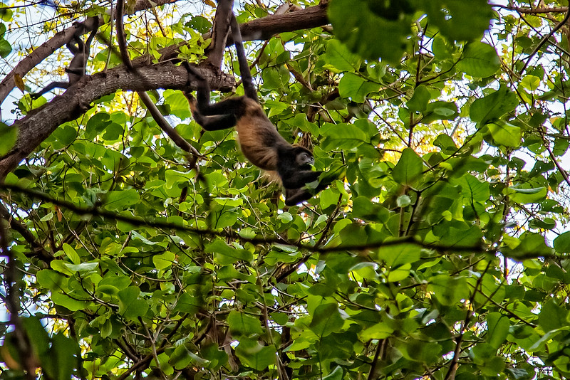 Costa Rica 2016 20160406-18-23-_MG_2861-006-Edit.jpg