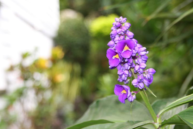 garden (111).jpg