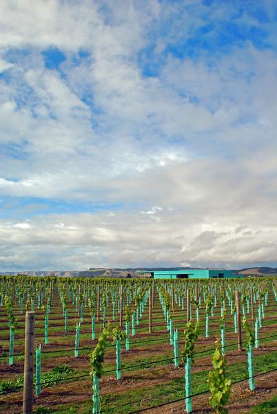 Wineries & Vineyards