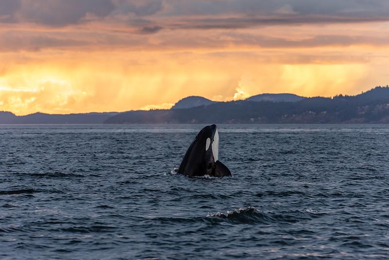 27. Orca Sunset.jpg