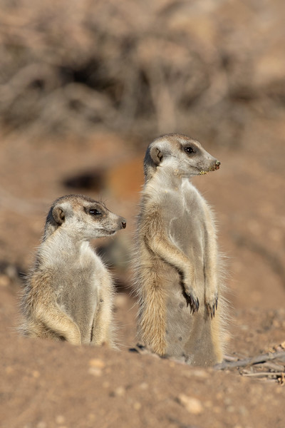 Namibia E4A3678.jpg