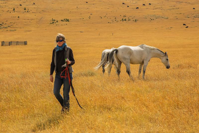 Horses 29.jpg