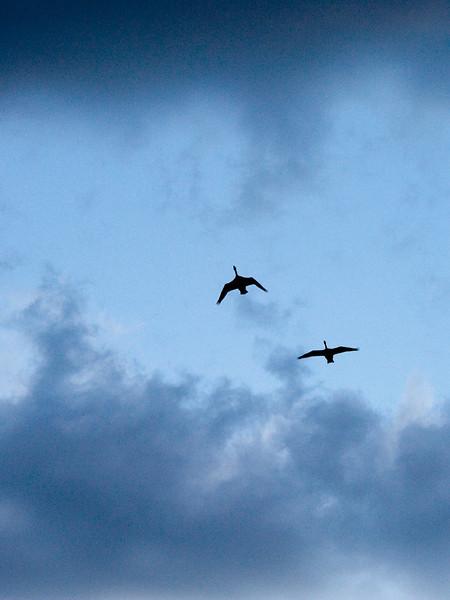 clip-015-bird_silhouette-wdsm-04may10-cvr-2190.jpg