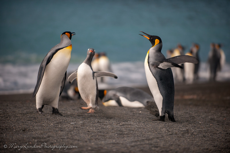 Antarctic-89