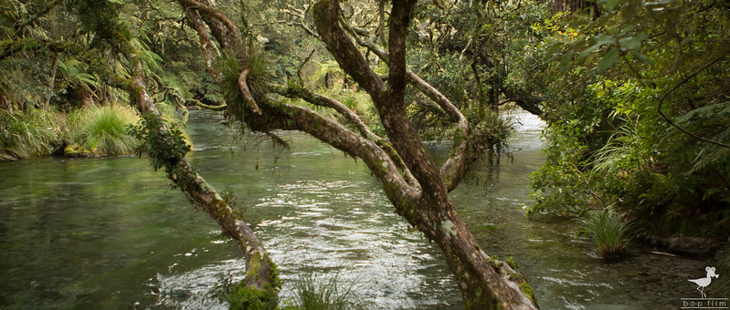 Tarawera 2.jpg