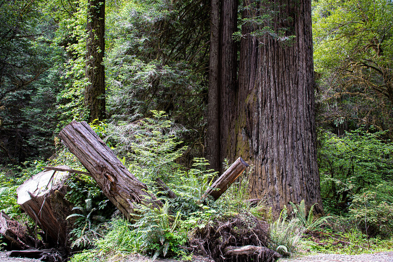 redwoodsFin-0969.jpg