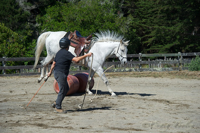 The Sea Ranch Equestrian Center yearly Open House