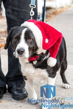 Miracle on Main St: Corky's Holiday Pet Parade '17