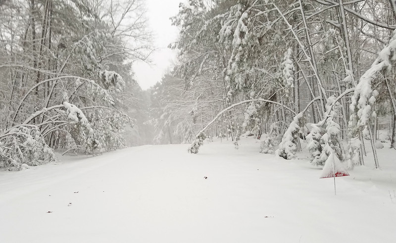 december snow 1.jpg