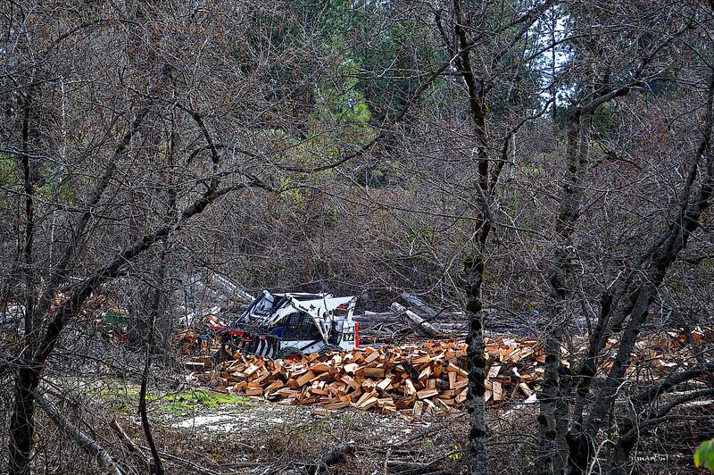 wood lot 3-13-2013.jpg