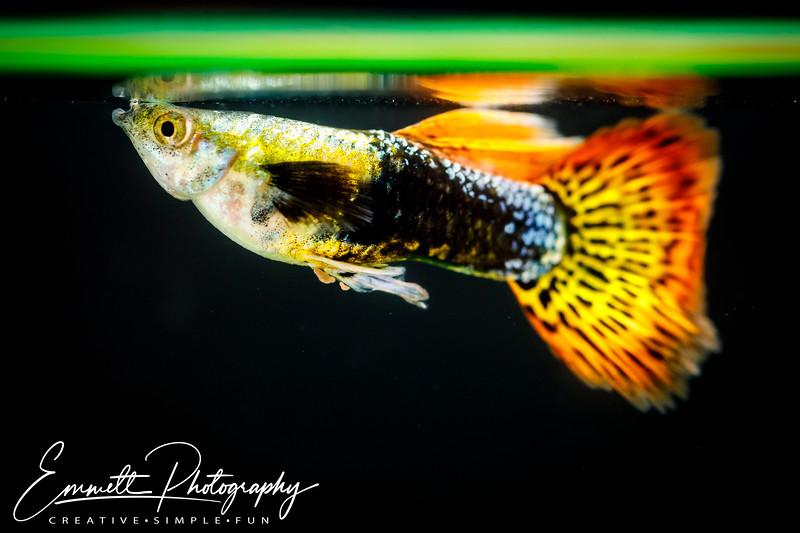 20200208-Fish-6.jpg