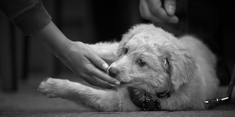 puppymar1317 4.jpg