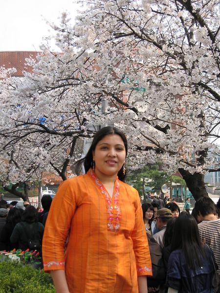 Cherry Blossom Festival, Seoul
