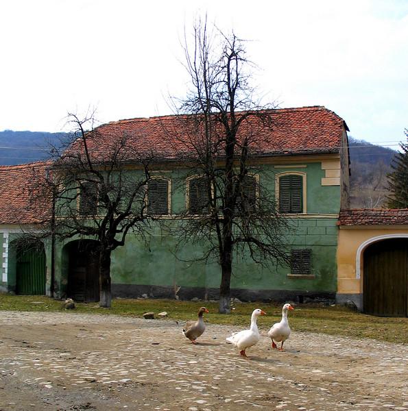 Romania0088.JPG