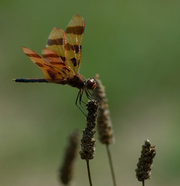 newdragonfly_edited-1.jpg