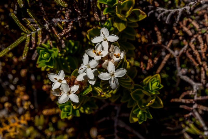 Pflanzen im Tongariro National Park