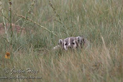 Badger 8-25-2013