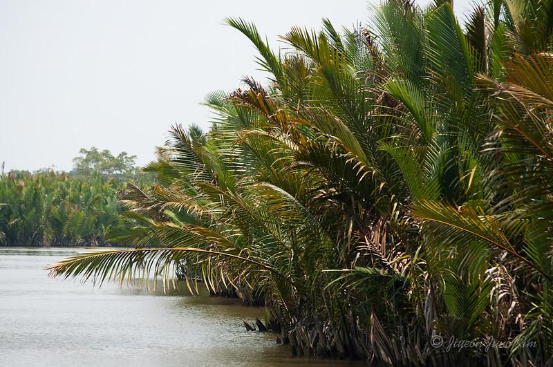 Borneo-Jungle-6684.jpg