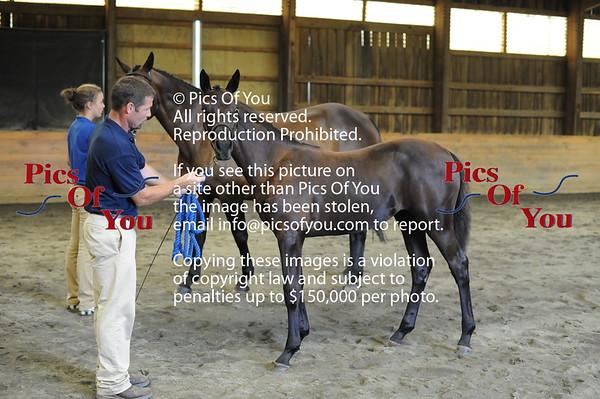 Foal entry 3