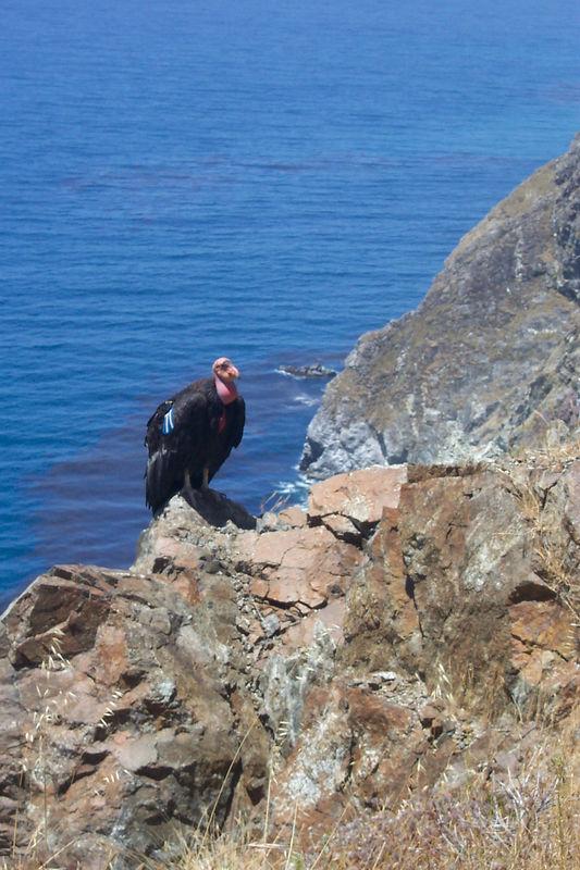 bird on a rock.jpg