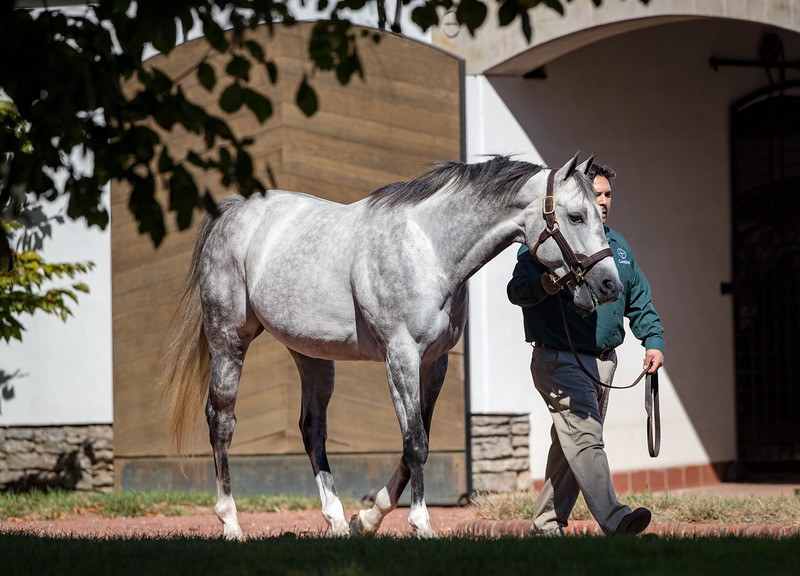 Bird Song at Gainesway 10.18.19