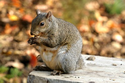 Squirrels and Other Wildlife